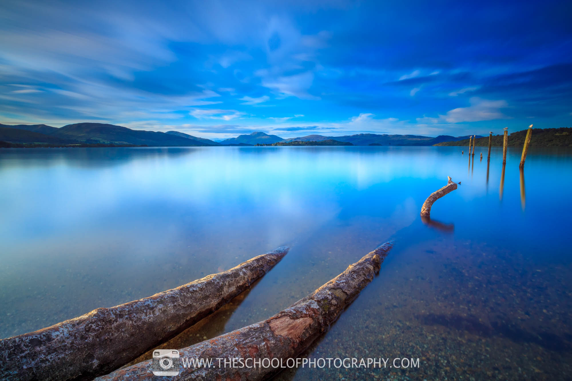 Fallen tree in Loch Lomond_2000px.jpg
