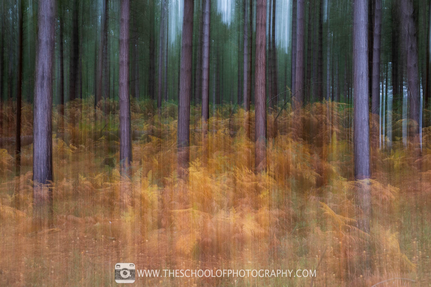ICM photography with slow pan at 1/2 second shutter speed