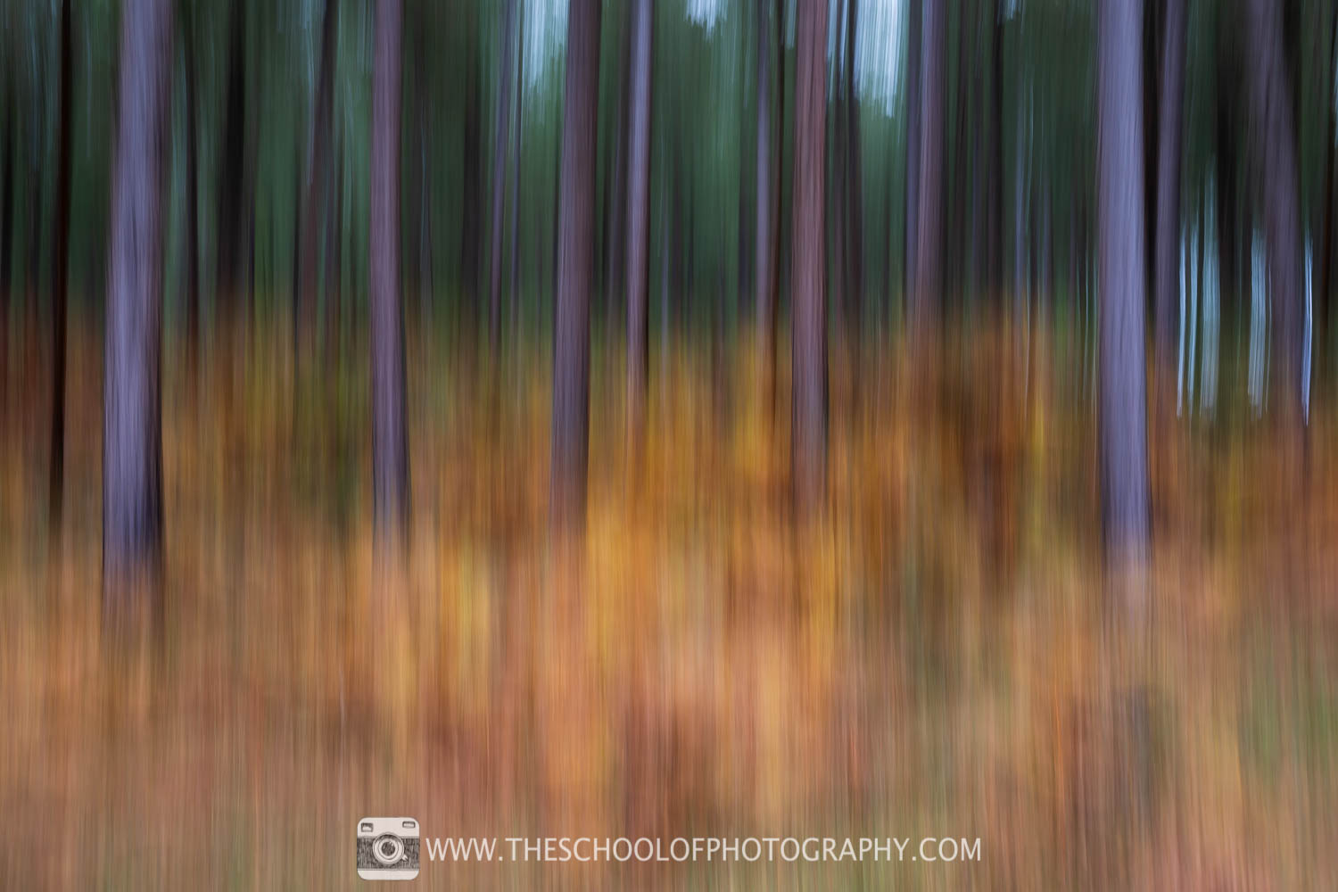 ICM photography with fast pan at 1/2 second shutter speed