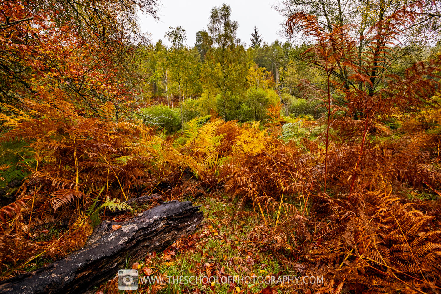 Autumn photography of the landscape