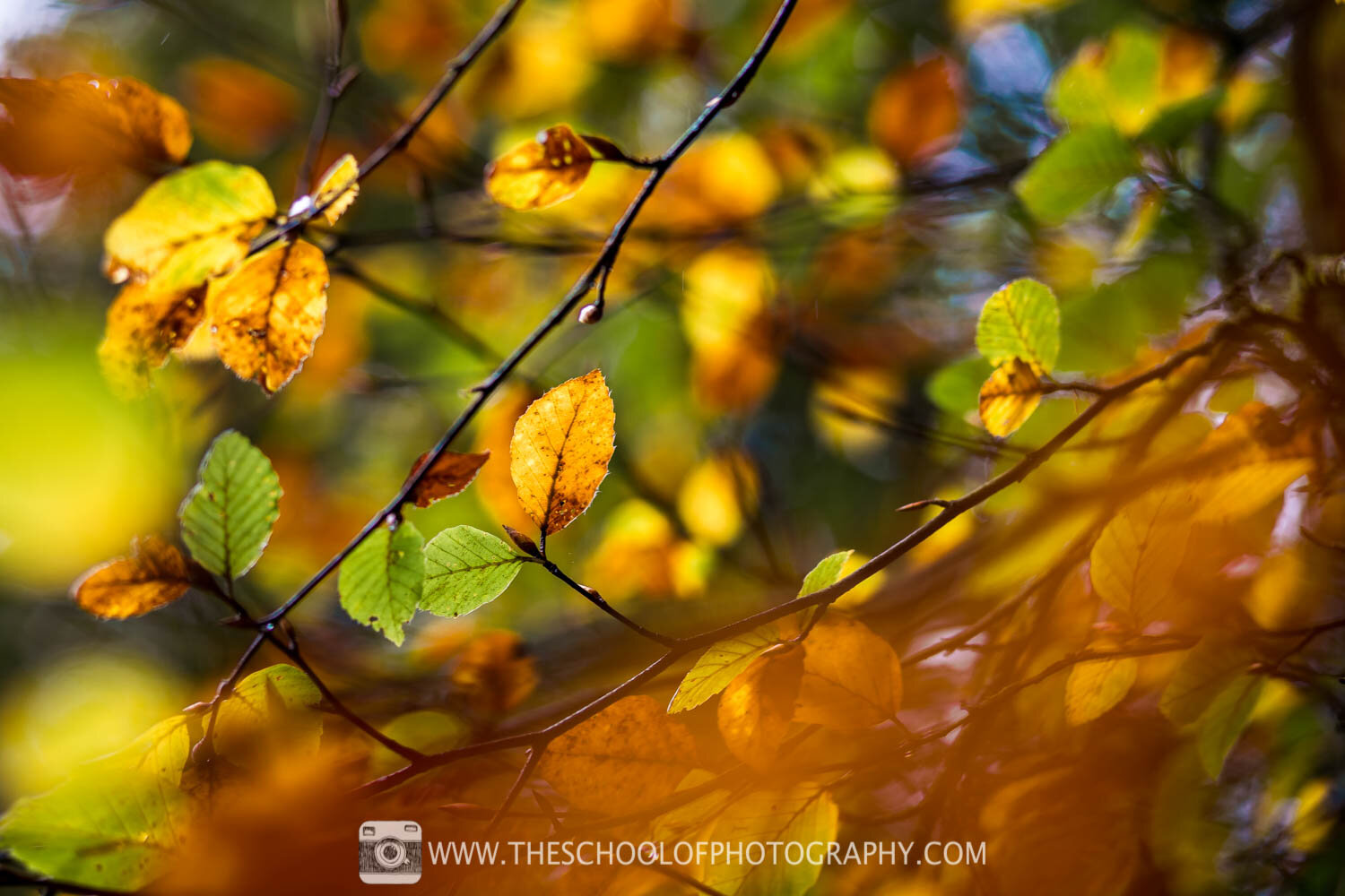 Photograph of Autumn leaves through the tress