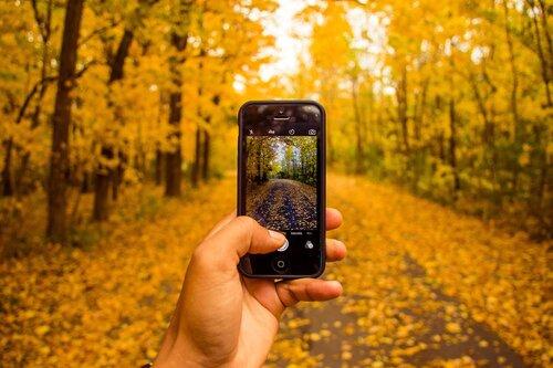 Photo de forêts prises sur iPhone à la lumière naturelle