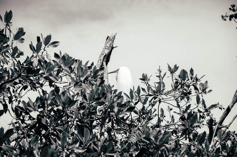 02_daniel_pazdur-heron.jpg