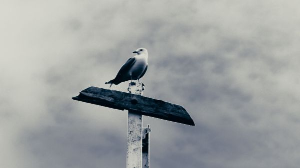 Storm Seagull