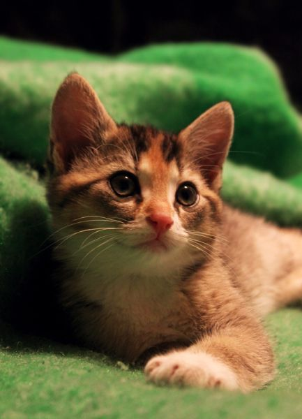 Little Miss Viola