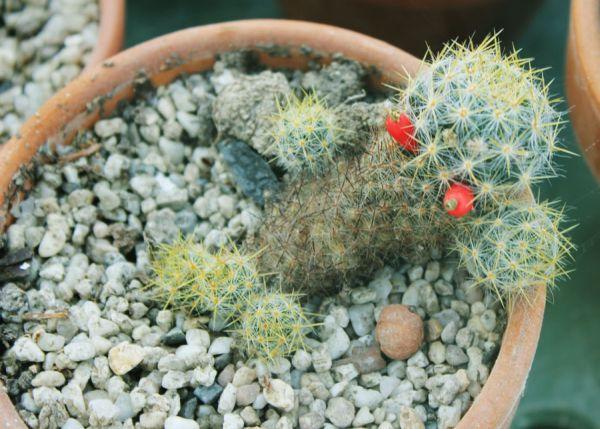 Cactus Dude
