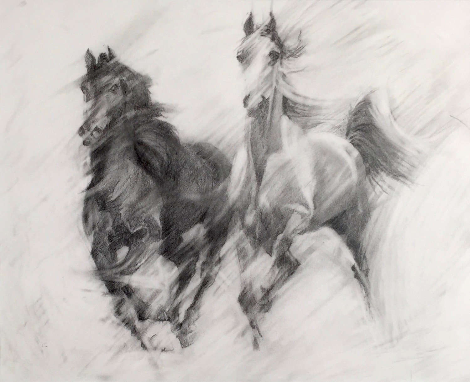 THESE TWO YOUNG HORSES GALLOP, CAREFREE, TOGETHER