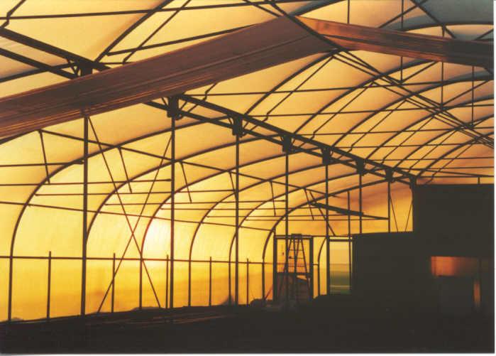 dawn inside.jpg