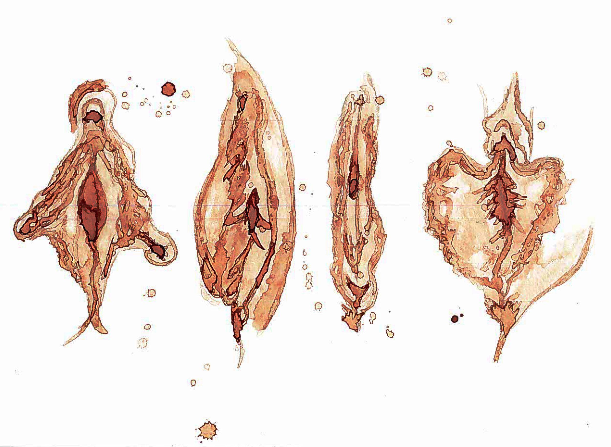 vulvas 2.jpg