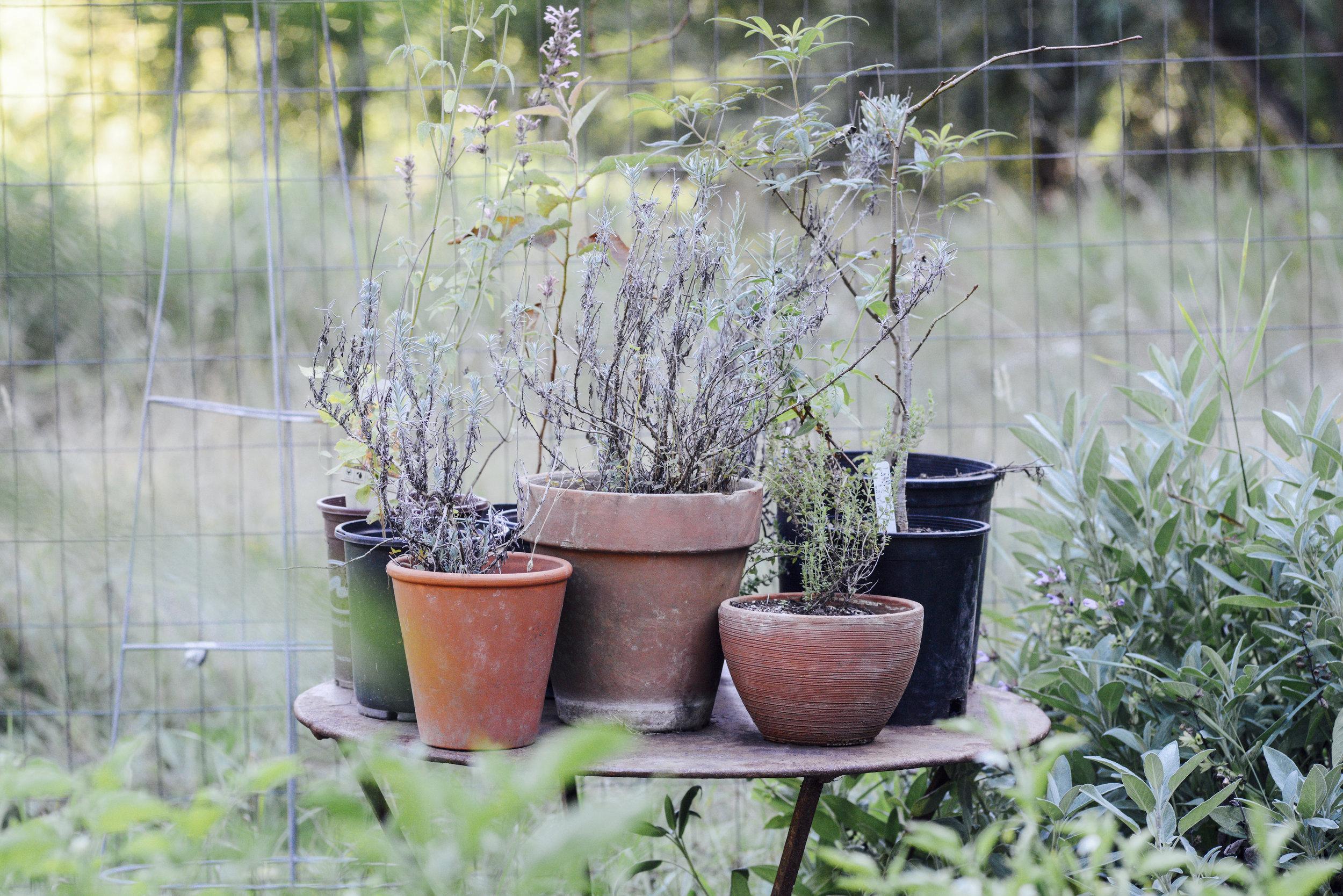 Plants on Table.jpg