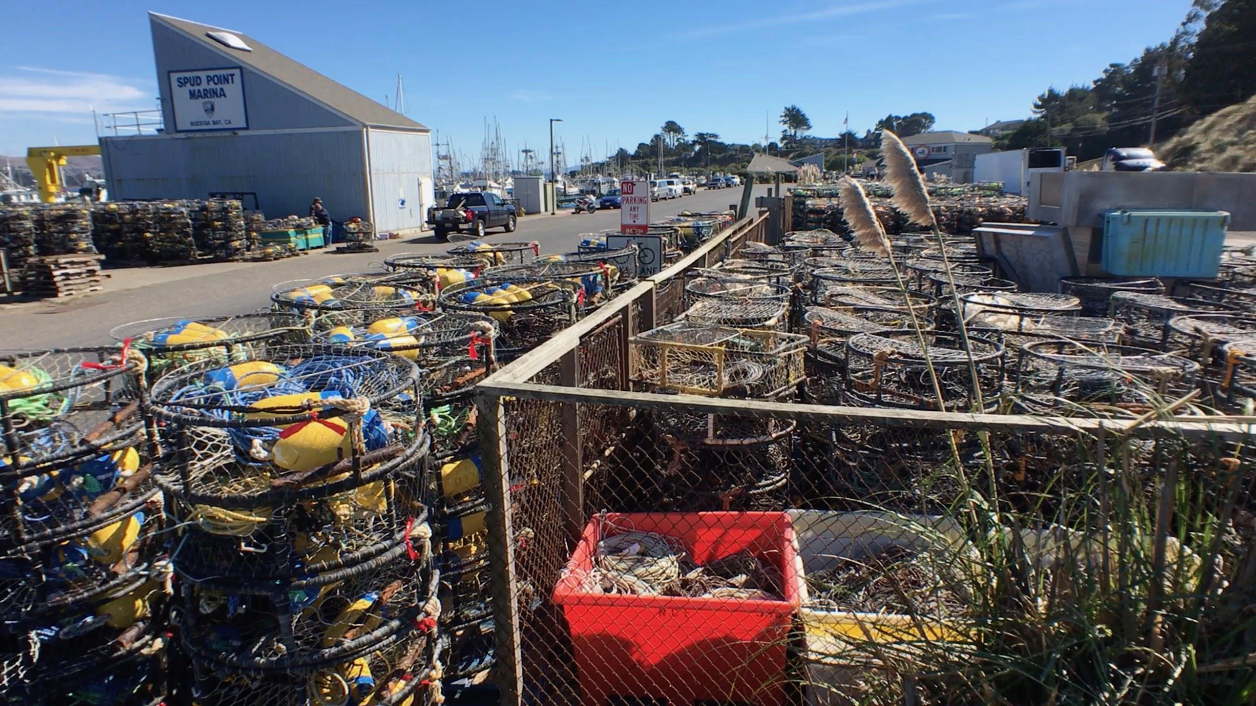 Heir Charley visits a crab fishery in Bodega Bay, CA, observing miles of crab pots.