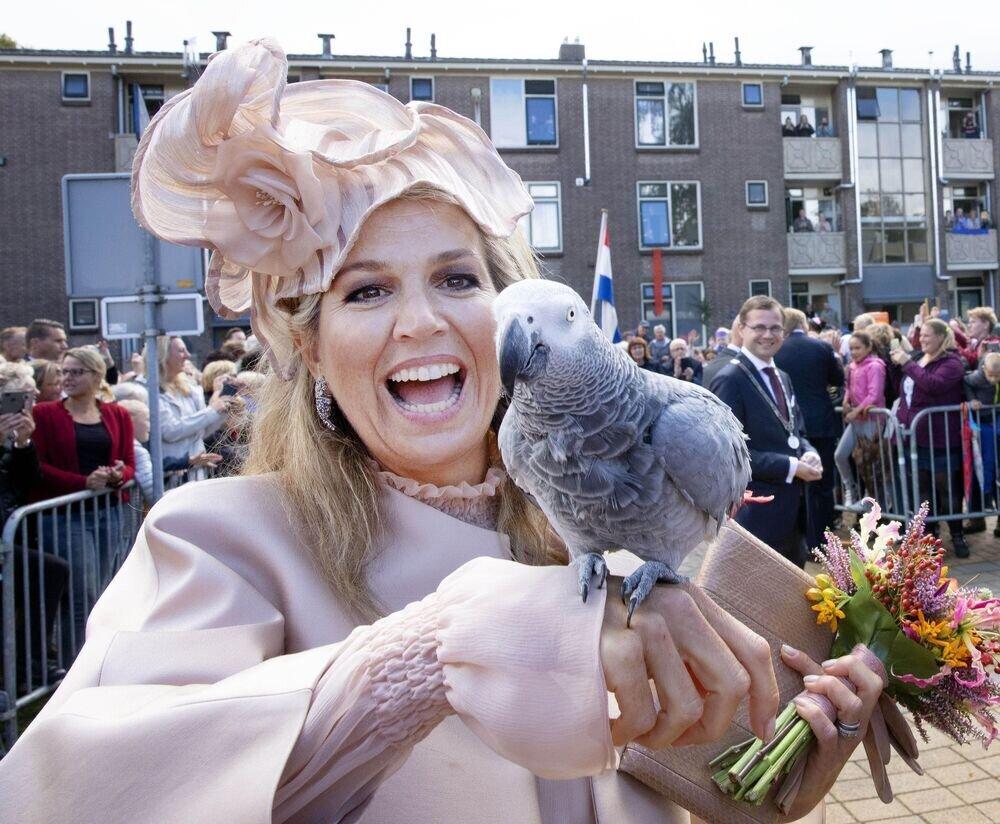 18. September 2019   Königin Maxima einen Vogel zu zeigen, gleicht an Majestätsbeleidigung. Zum Glück war es aber ein echter. Bei einem Termin freundete sich die tierliebe Niederländerin mit diesem Graupapagei an.  © imago images / PPE