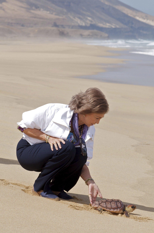 Alt-Königin Sofia setzt sich für saubere Meere ein, damit auch bedrohte Schildkröten wie diese unechte Karettschildkröte überleben kann.  © epa-Bildfunk