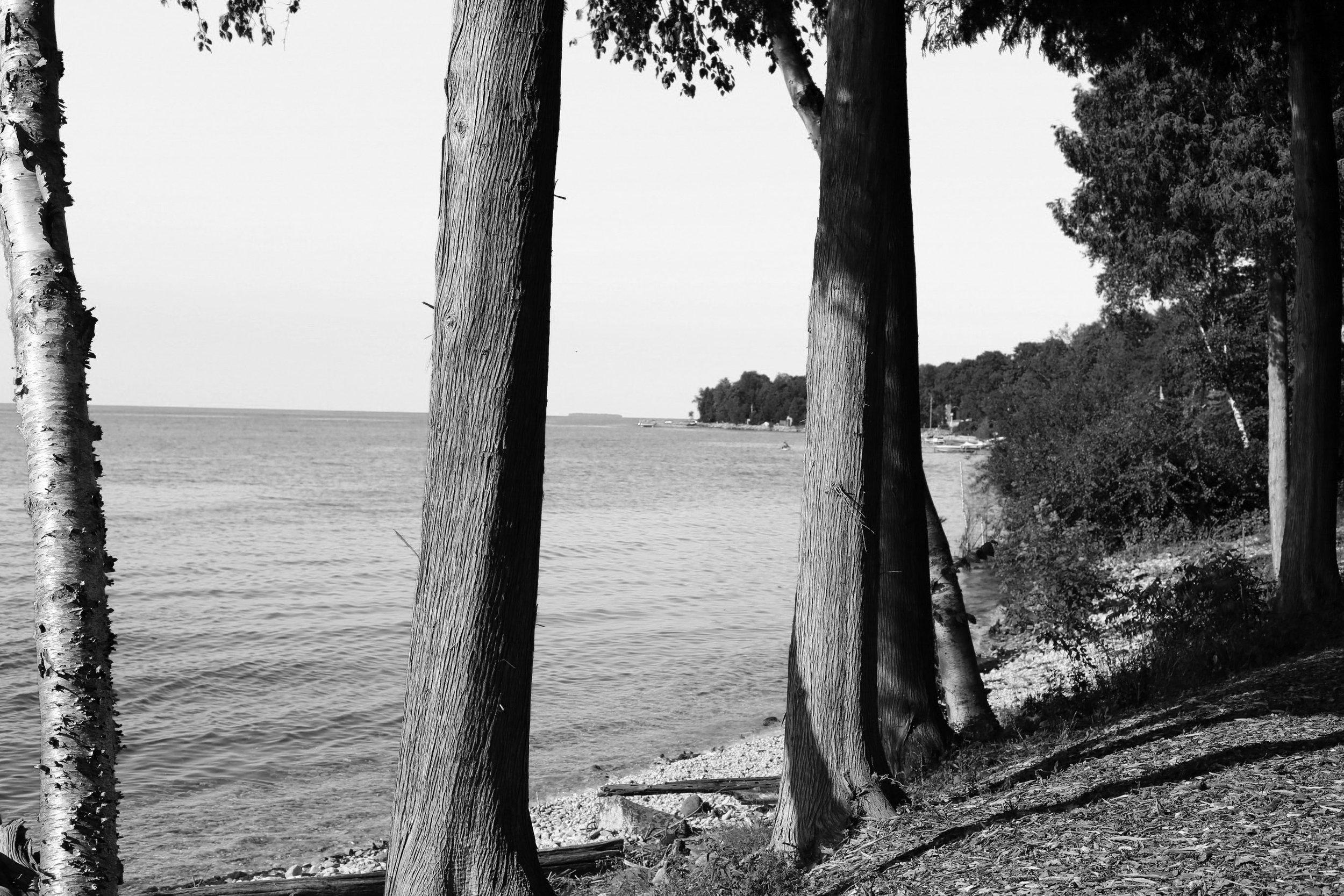 TREES(B&W)(2).jpg