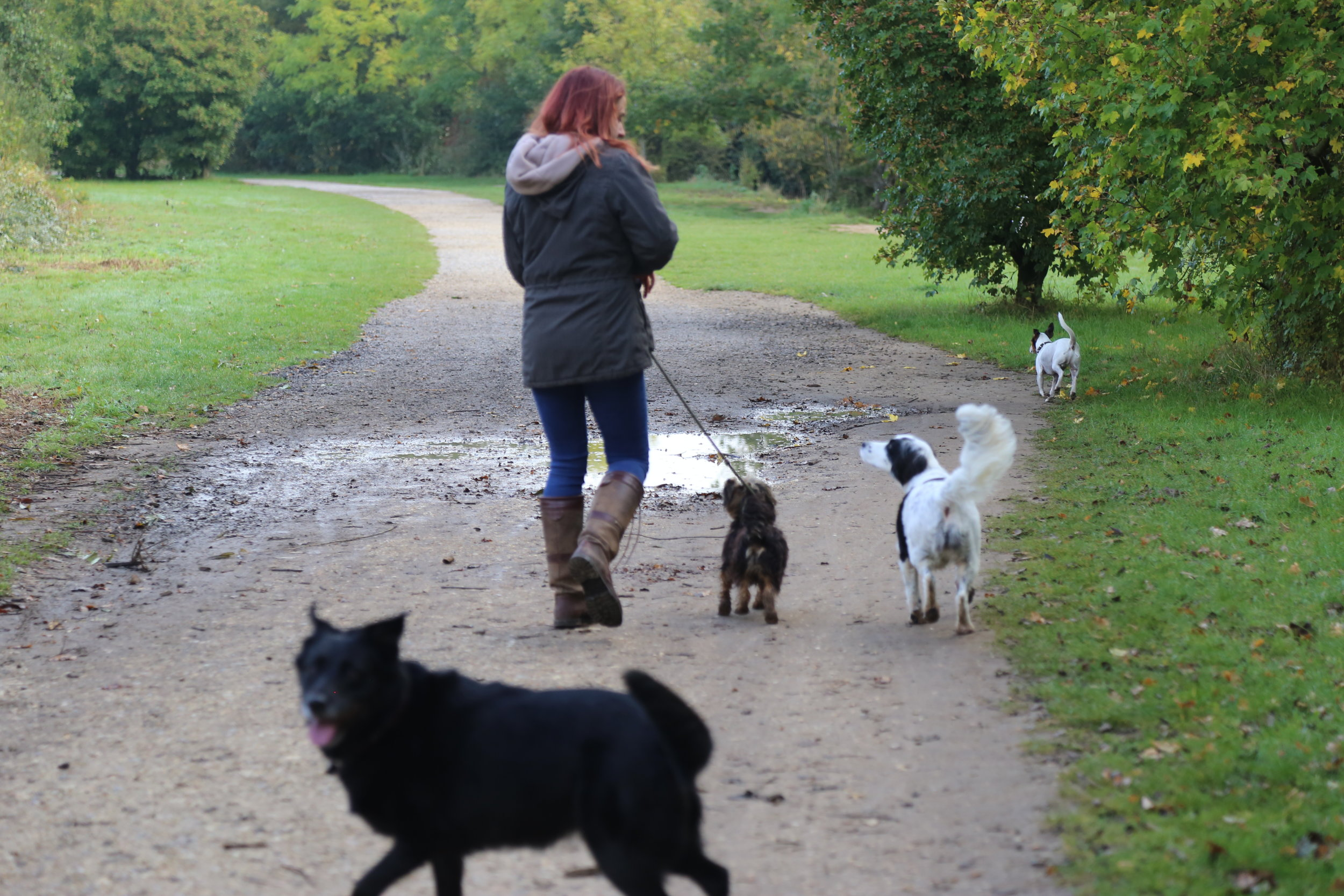 Jurassic_Bark_Dog_Walk_Newbury_22