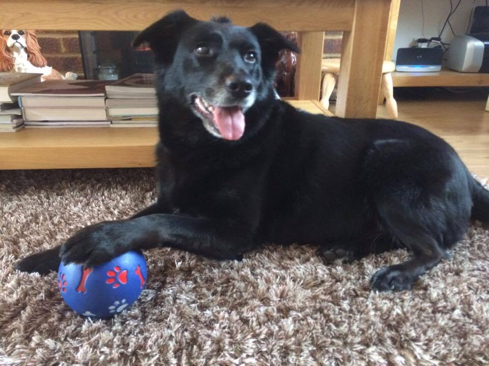 Tess showing off her activity ball