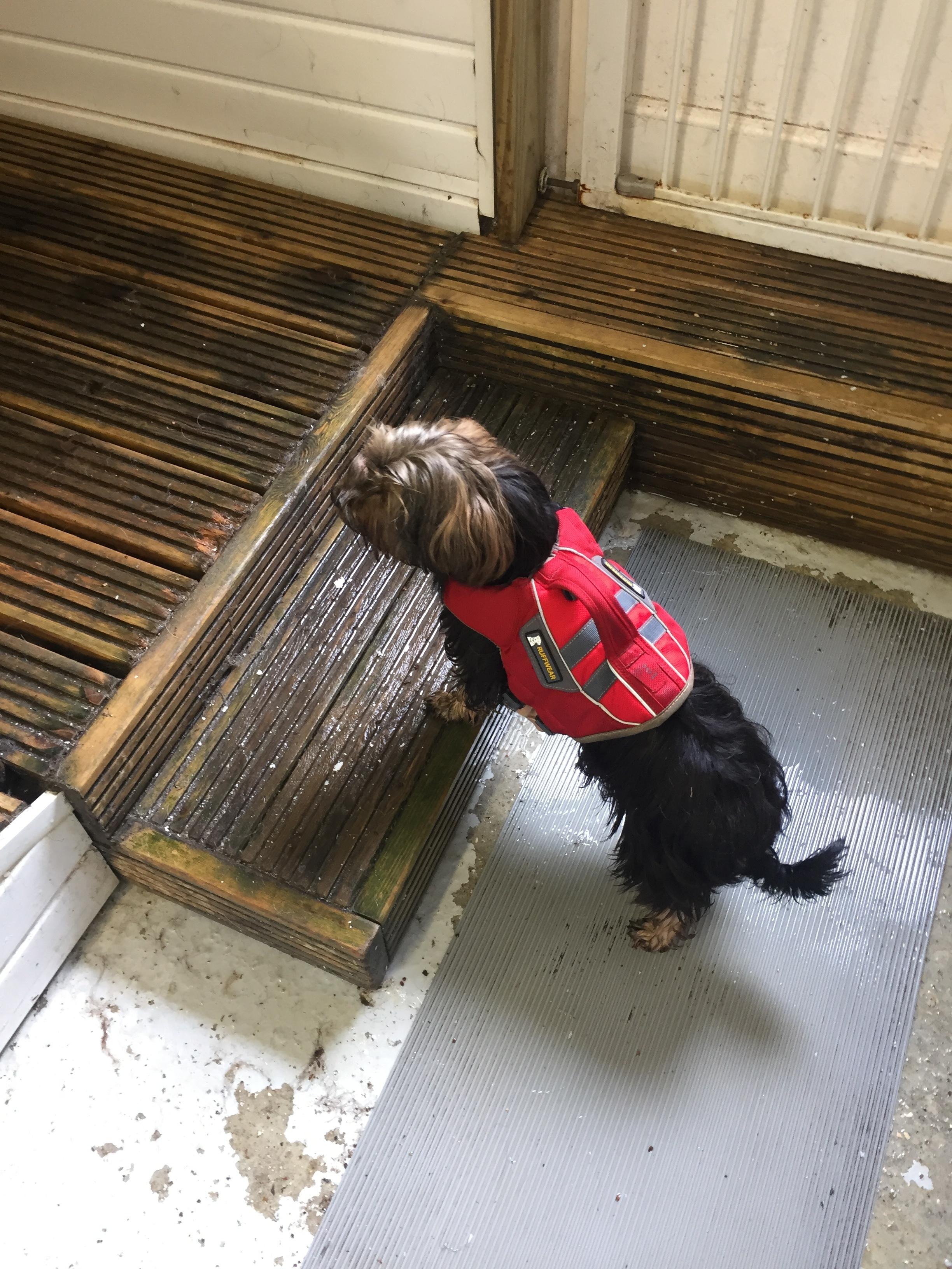 dog_lifejacket
