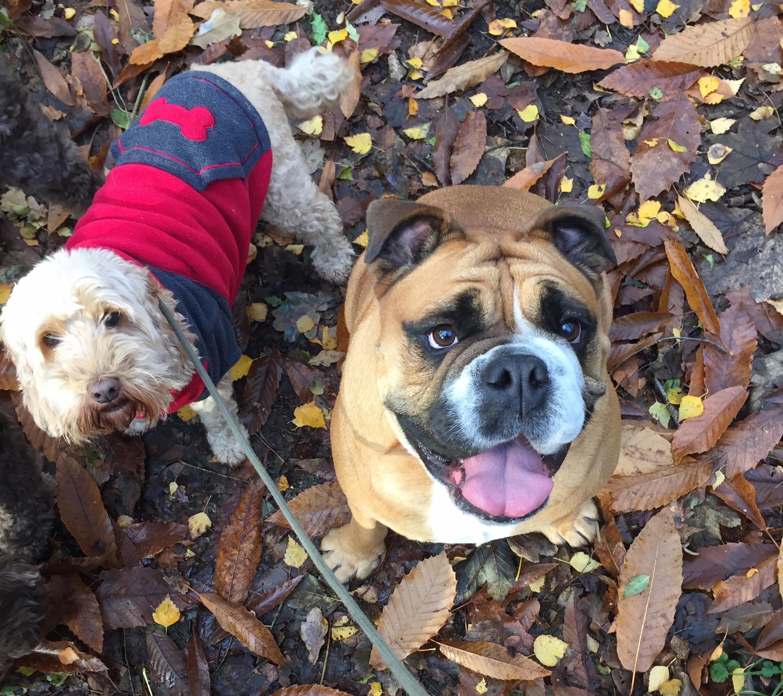Humphrey & Tilly