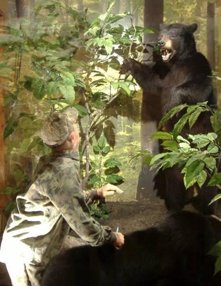 Beavers Bend Wildlife Museum