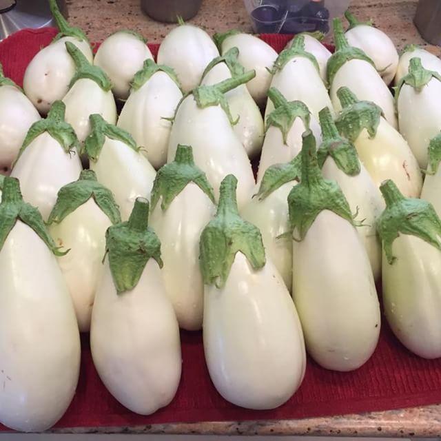 Eggplant Clara