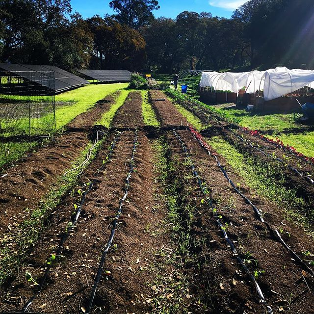 Veggie Planting Beds