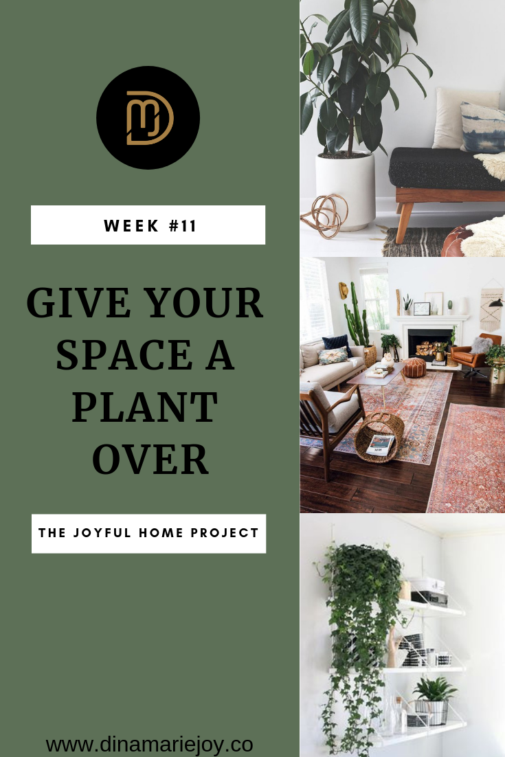 Week # 11 of The Joyful Home Project with Dina Marie Joy. Give Your Space a Plant Over. www.dinamariejoy.co
