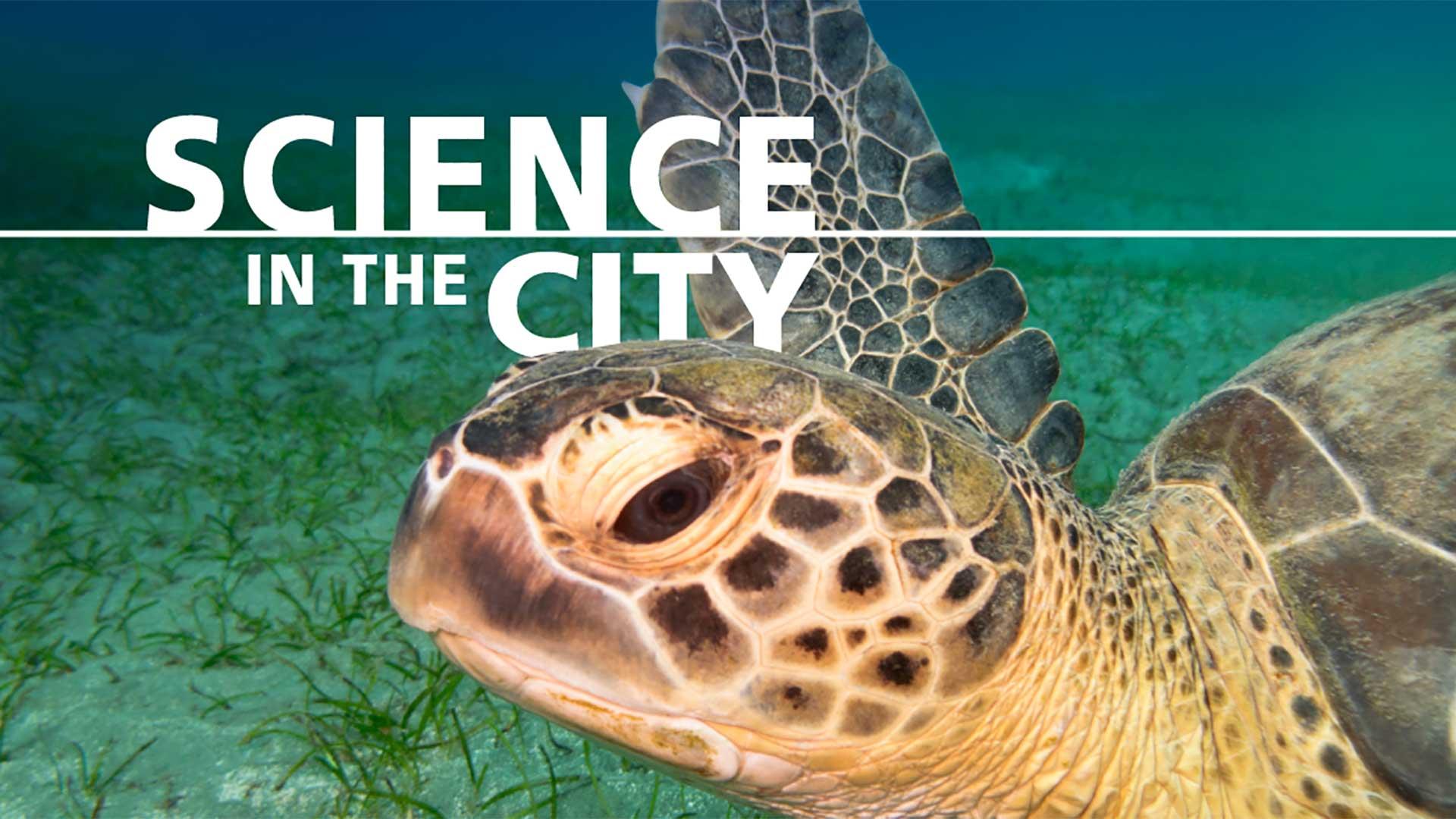 sitc-sea-turtles-1920x1080.jpg