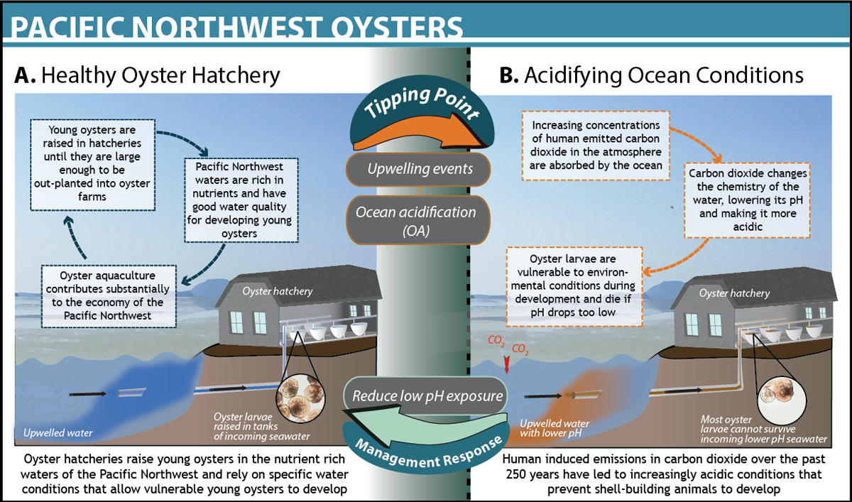 This infographic and article from  Oceantippingpoints.org  helps explain the problem.