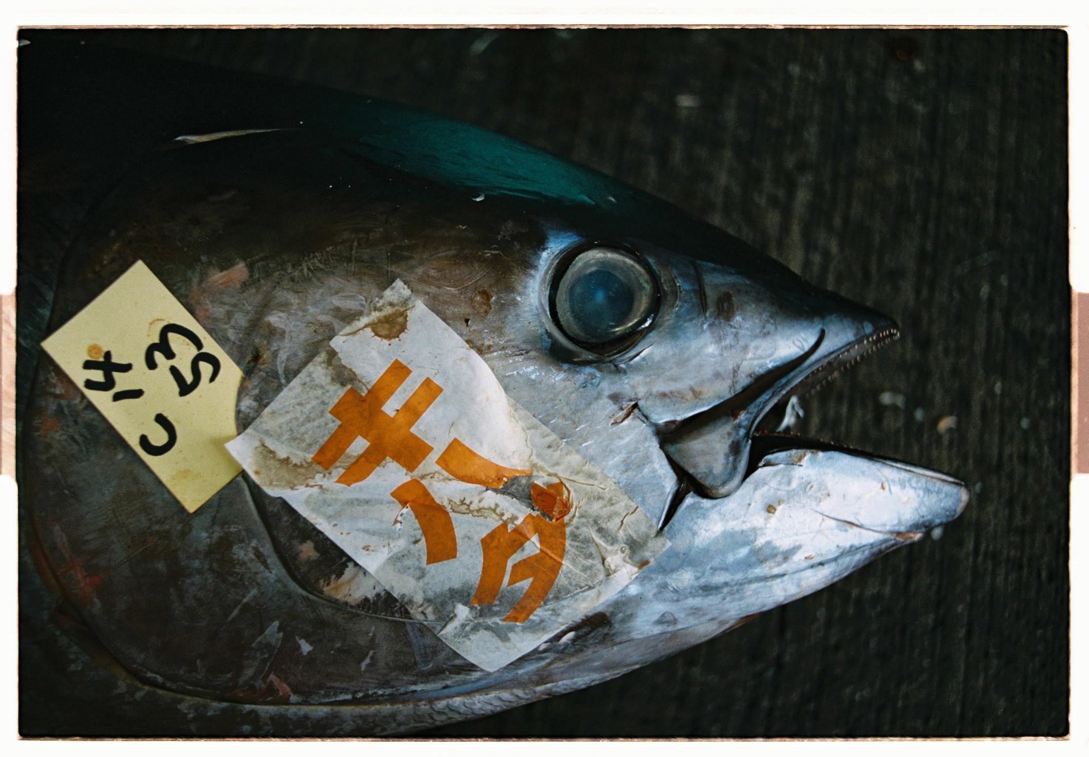 Japan-000034-5.jpg