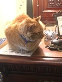 Pip at the Registration desk!