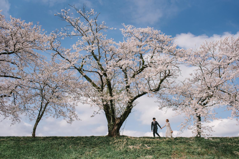cherry_blossom_prewedding-14.jpg