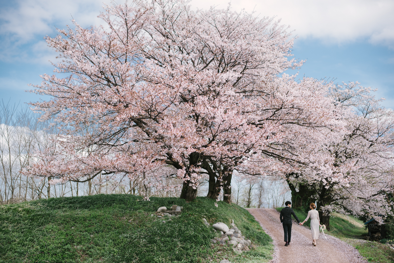 cherry_blossom_prewedding-28.jpg