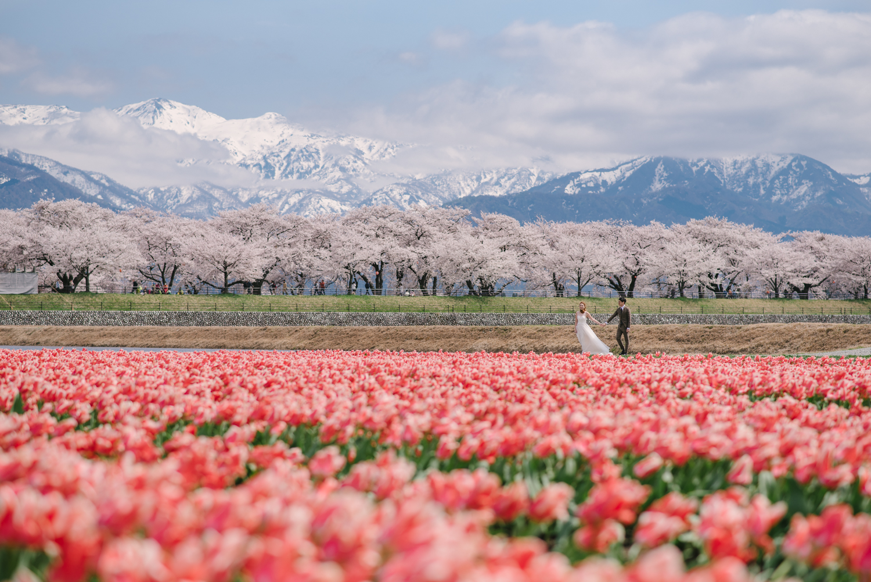 cherry_blossom_prewedding-30.jpg