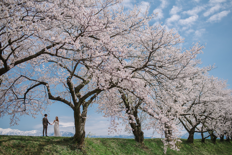 cherry_blossom_prewedding-38.jpg