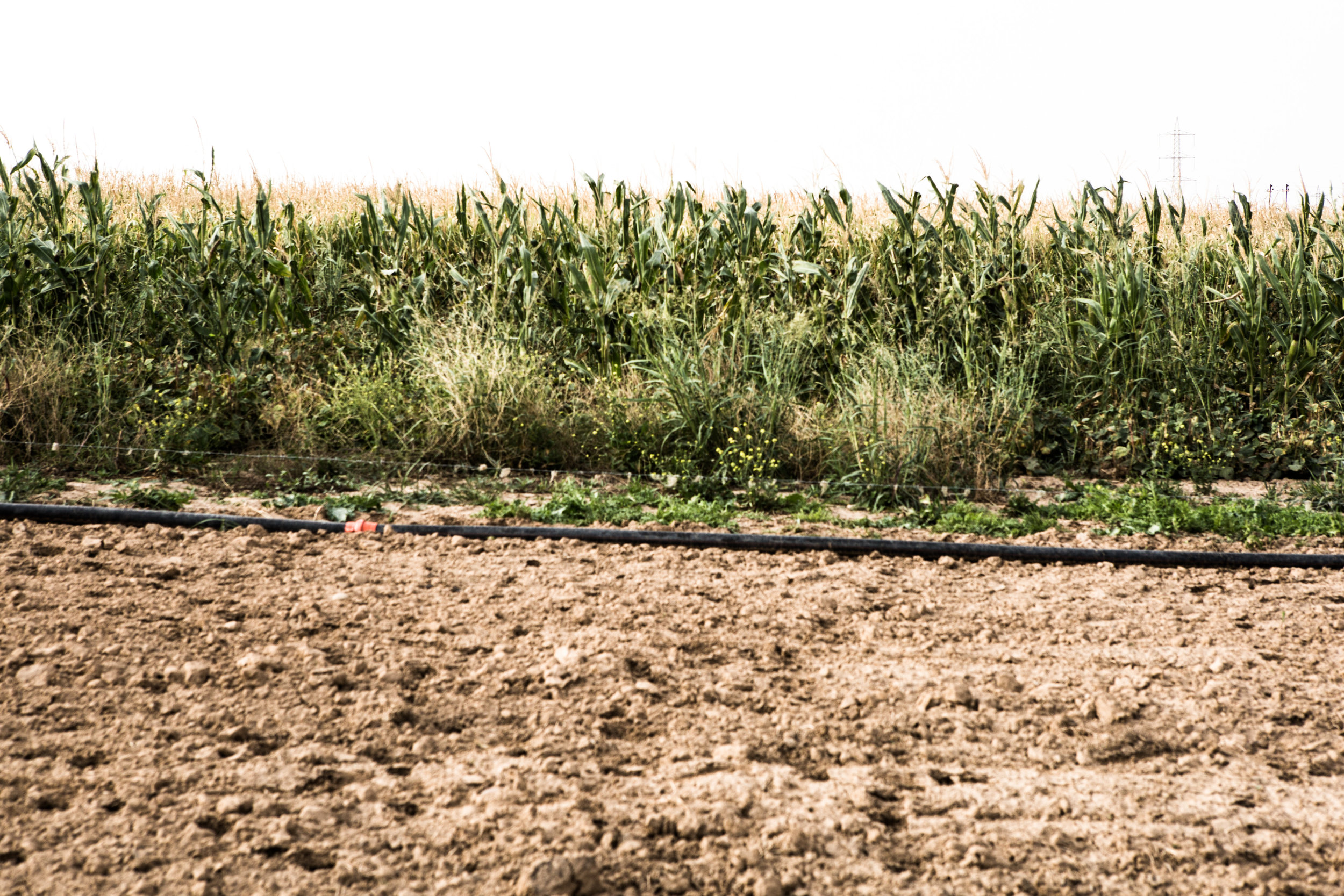 Cornfields in Chakhmakha remain littered with IEDs planted by ISIS.