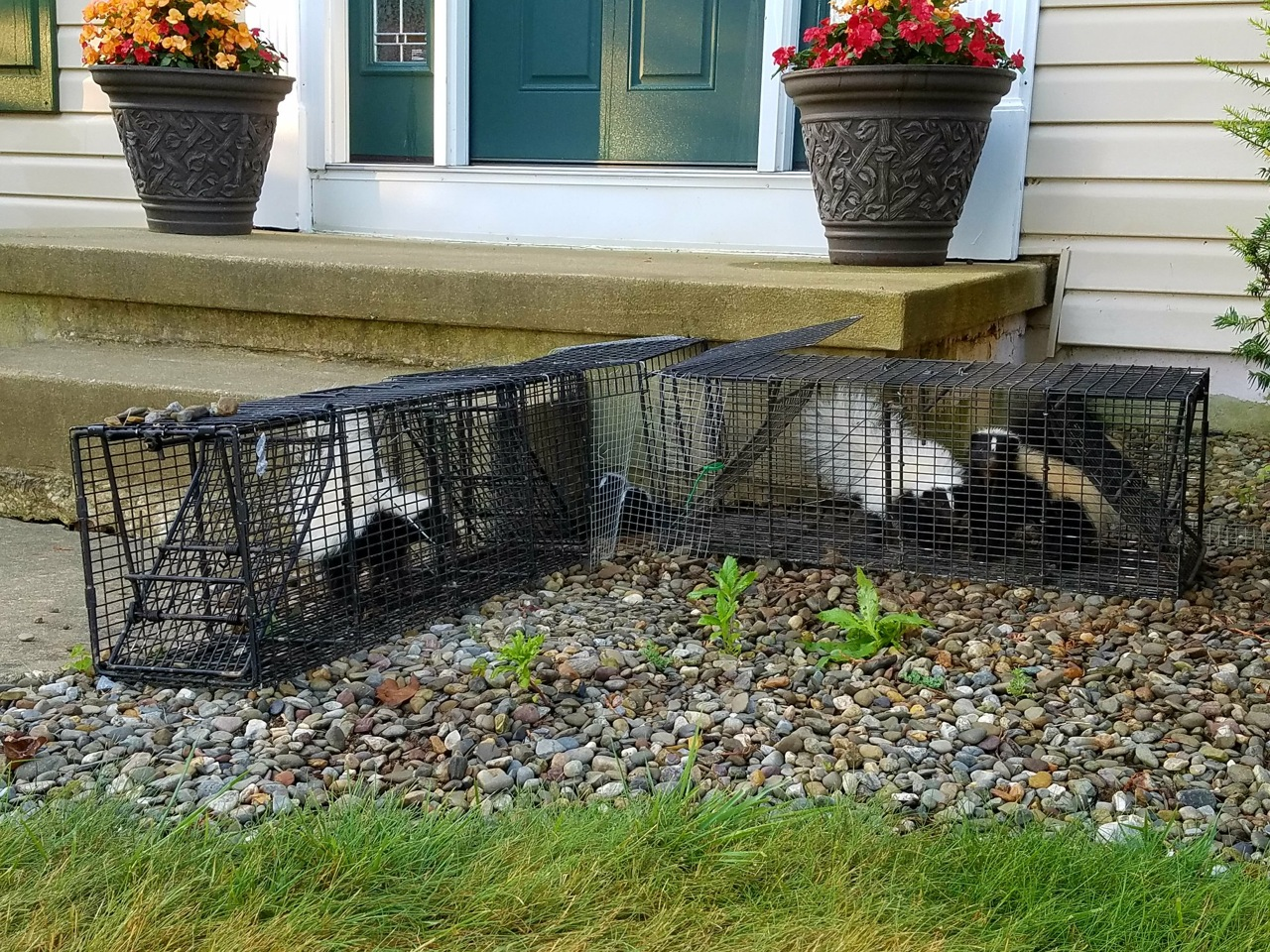 skunk2.jpg