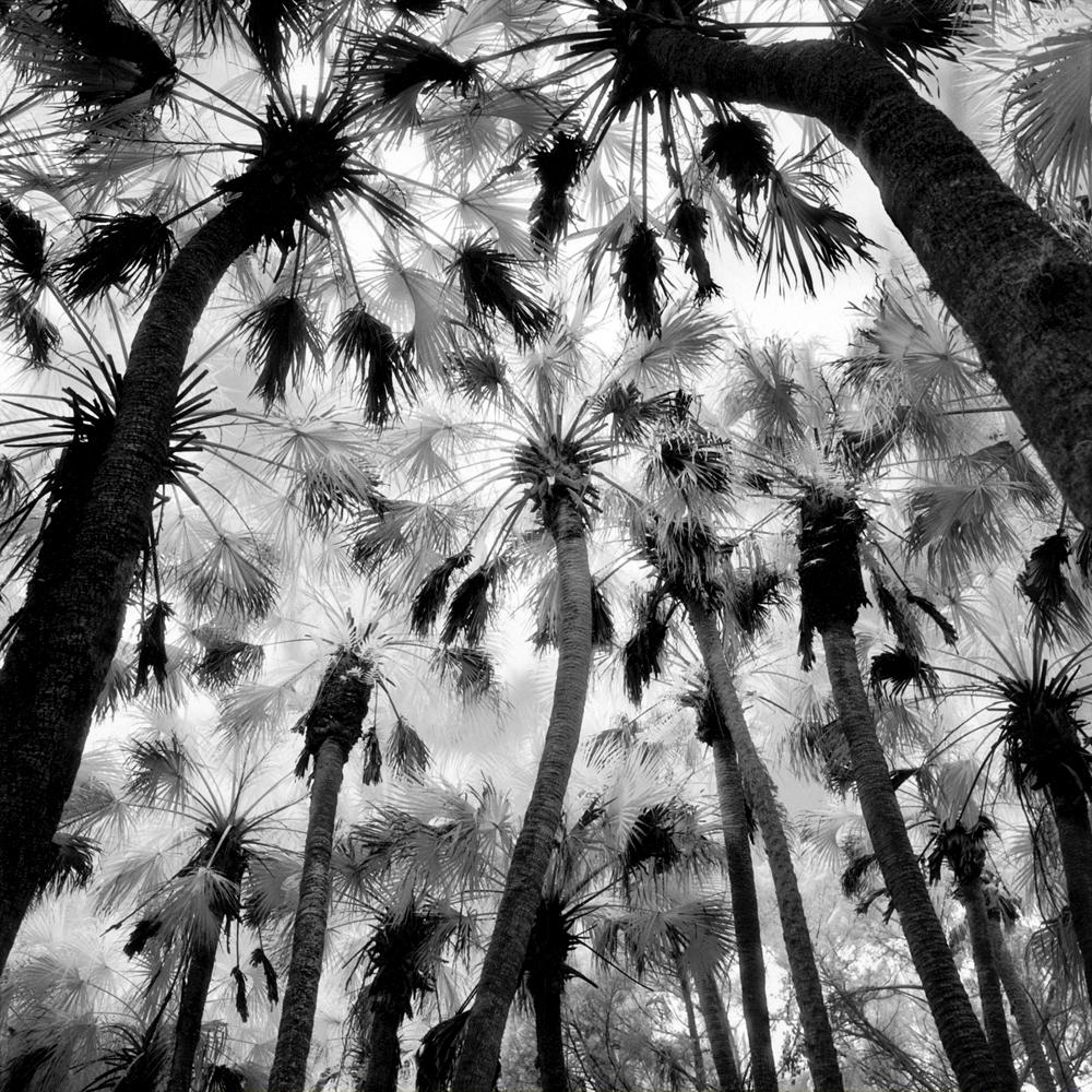 Primitive Florida