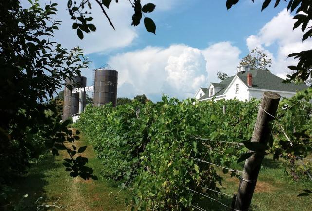 alfalfa_winery1.png