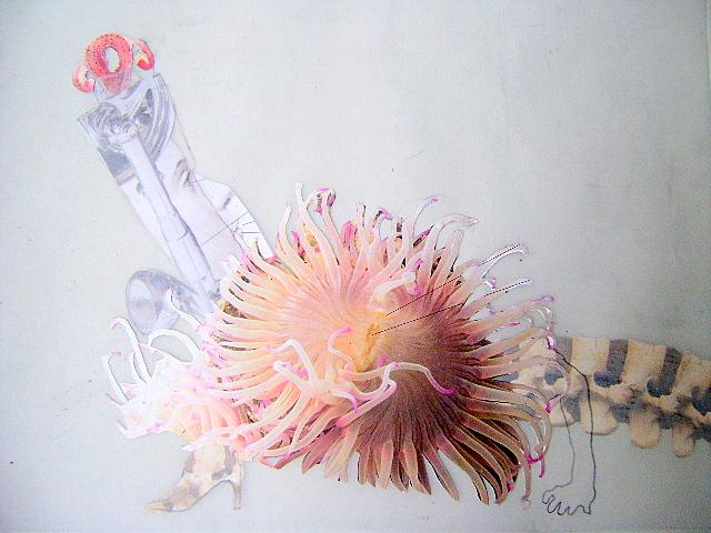 cop medusa.JPG
