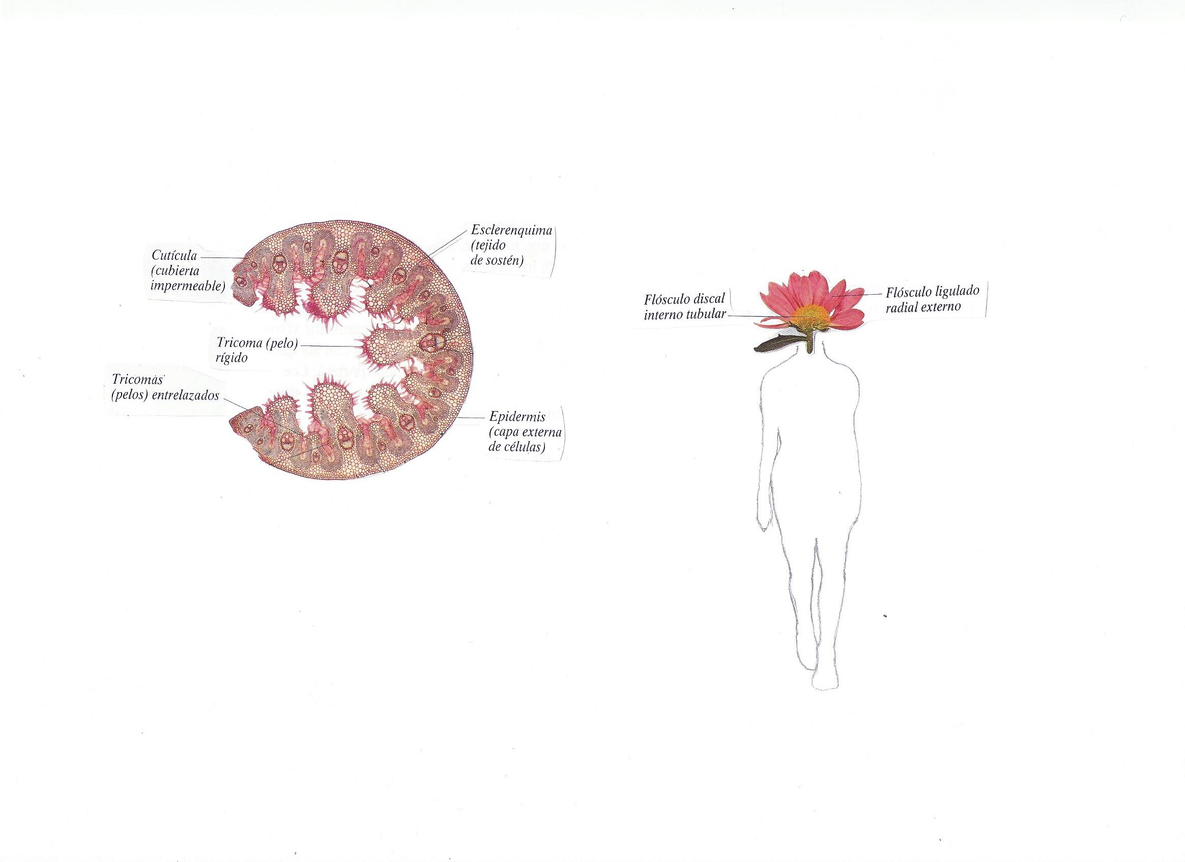 Botánica anatómica 3.jpg