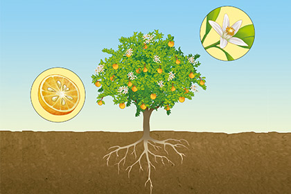 4-scientific-illustration-vegetal-orange-flower-vegetation-lu-mori.jpg