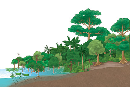 4-scientific-illustration-vegetal-Riparian-vegetation-lu-mori.jpg