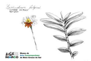 Lu-Mori_diario-de-estudos-botanicos-marco-1.jpg