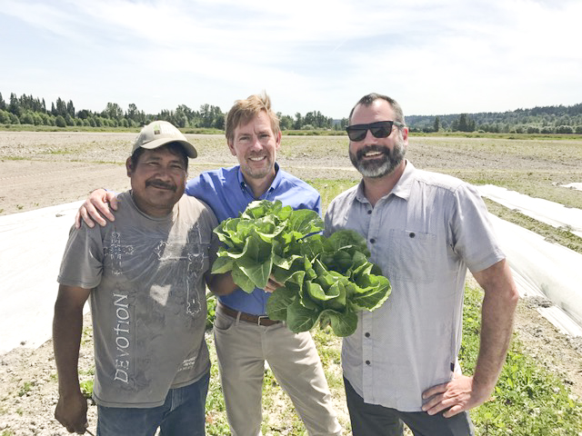 Fresh Romaine lettuce grown at Sound Sustainable Farms, June 2017. This same lettuce head went directly into a salad whipped up by Tutta Bella's Chef Brian Gojdics (right). True farm to table product!