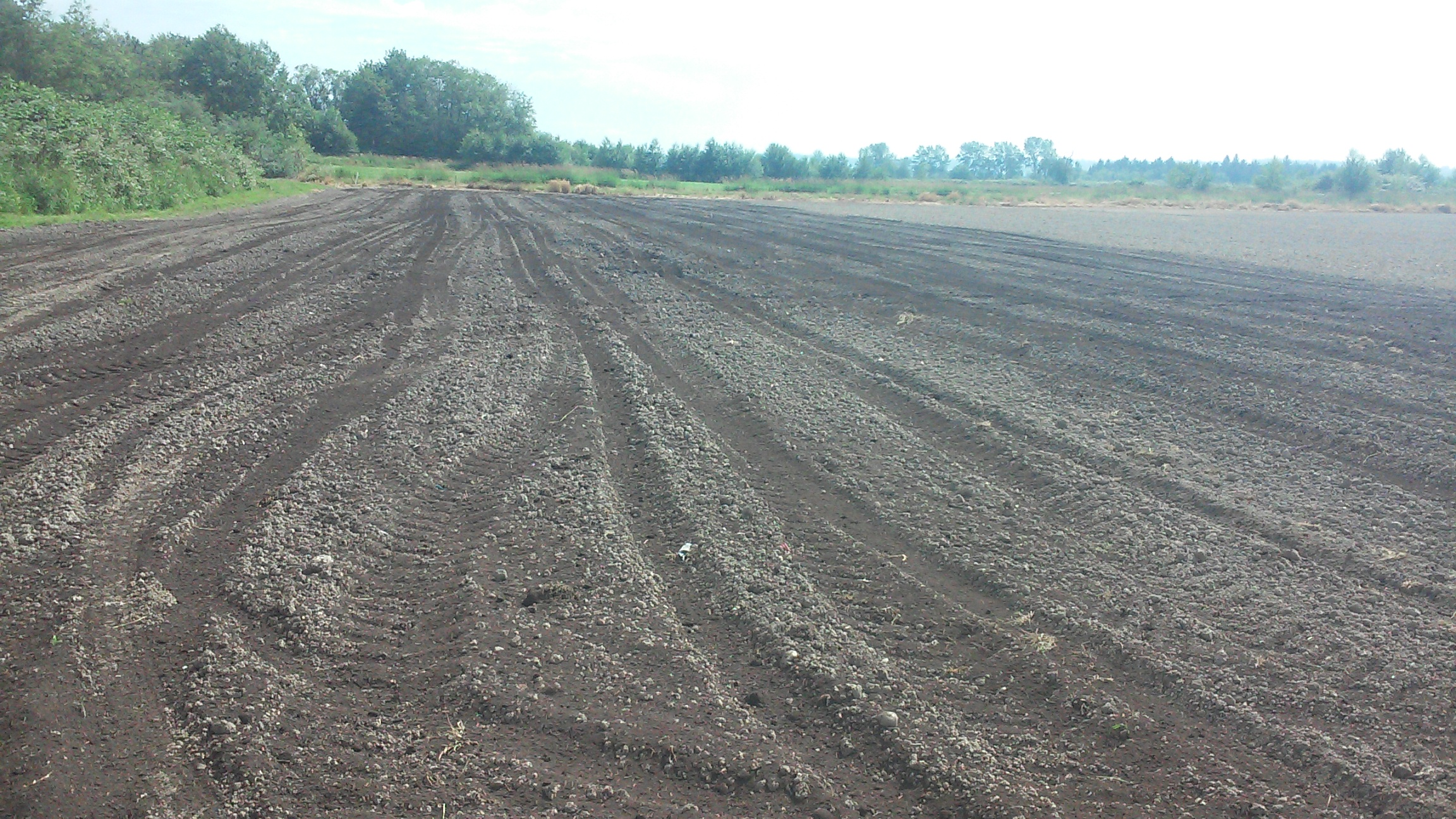 Carleton Farms in Lake Stevens, WA loaded with Cedar Grove Compost and ready to grow.