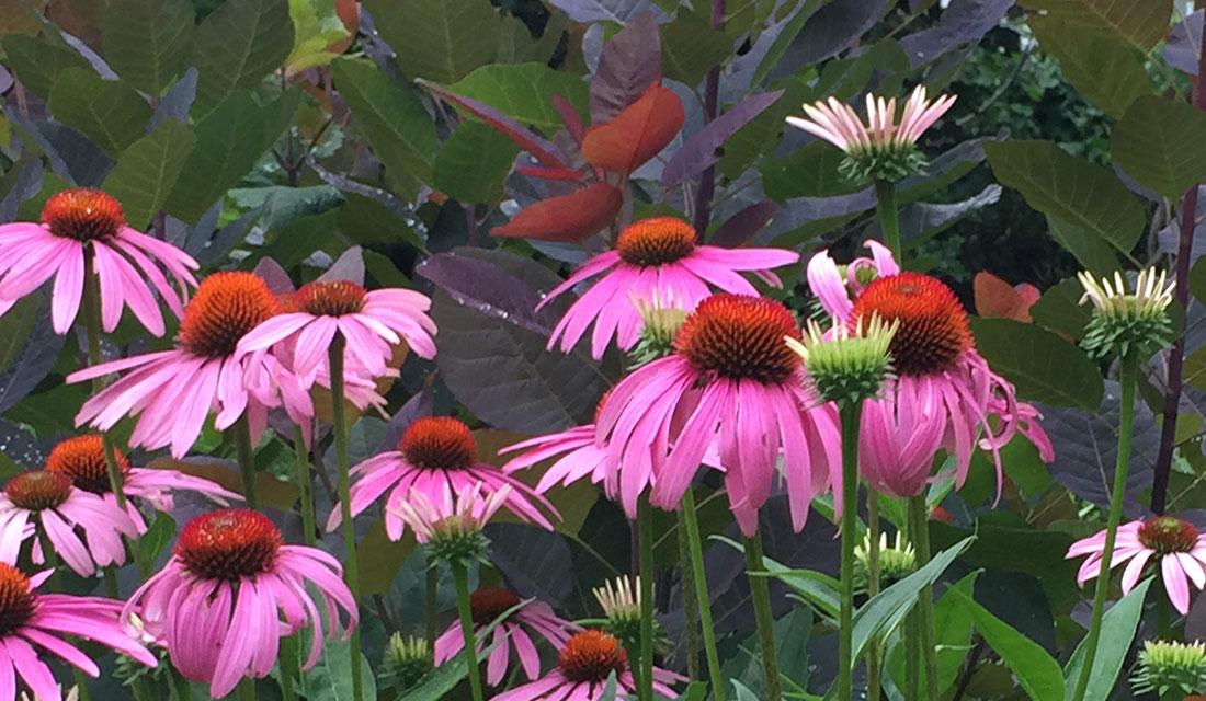 Kristina-Kent-Gardens-Gallery-3.jpg