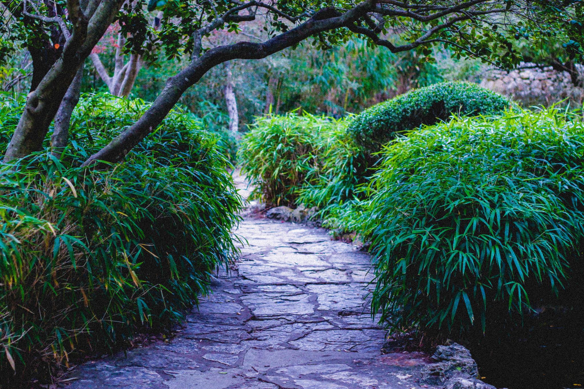 Austin Botanical Gardens // Carter & Laila