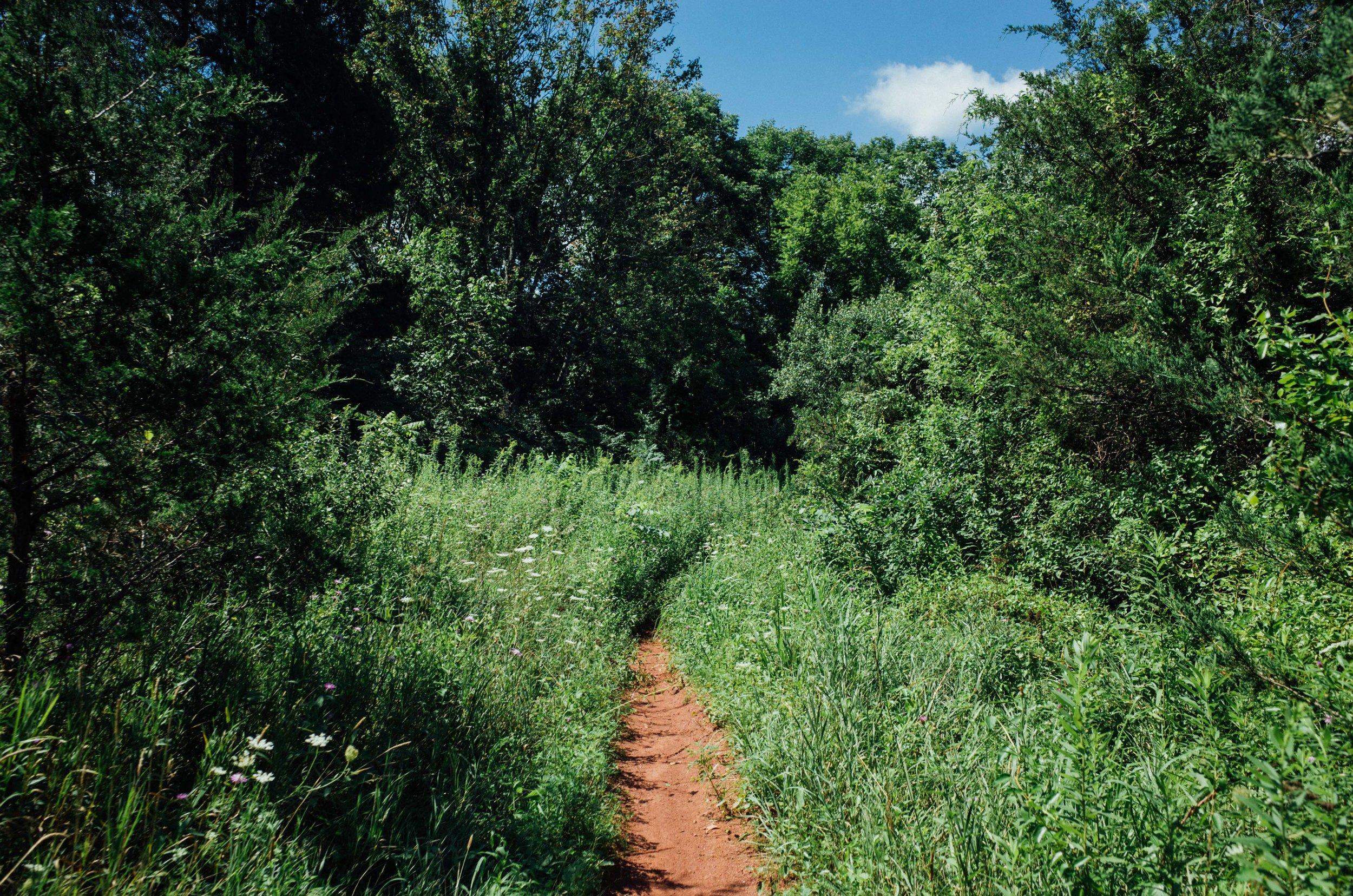 Photo Rhetoric - Six Mile Run in August-201.jpg