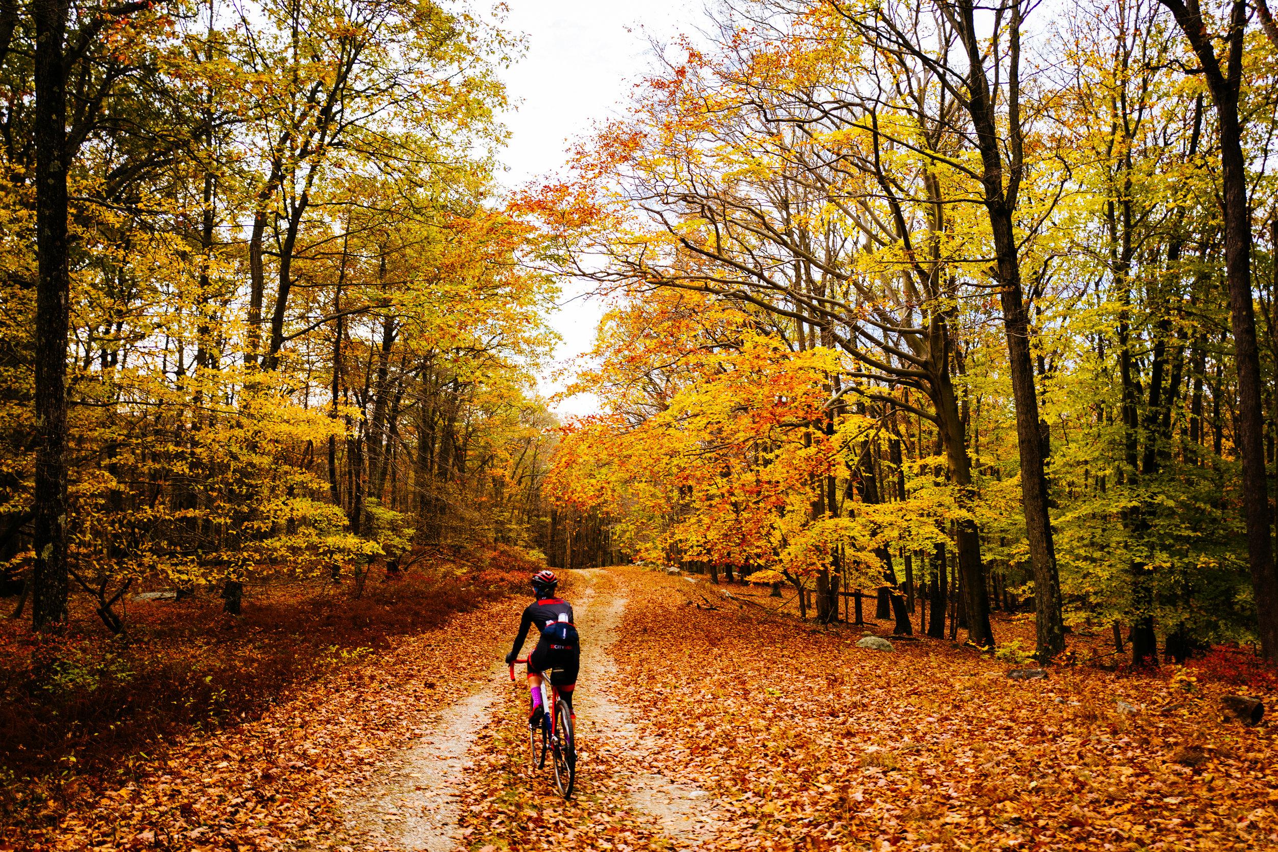 Photo+Rhetoric+-+Fall+Foliage-1029.jpg