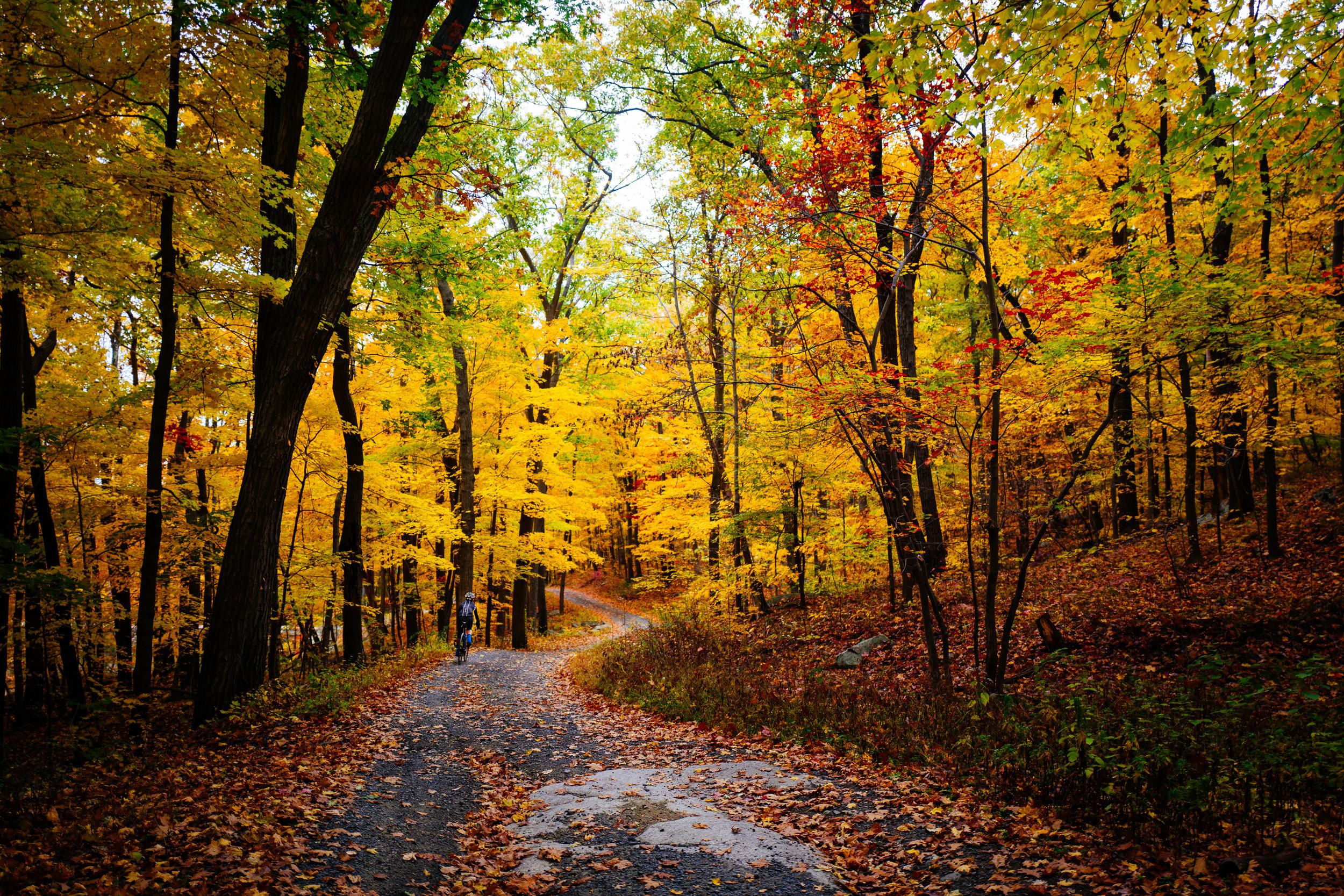 Photo Rhetoric - Black Rock Forest-1011.jpg
